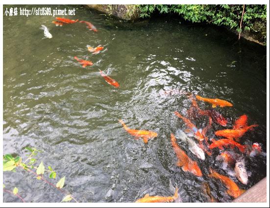 106.2.4.(17)峇里森林‧鱘龍魚套餐.JPG