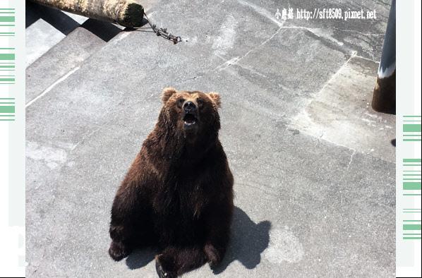 106.7.9.(23)昭和新山熊牧場.JPG