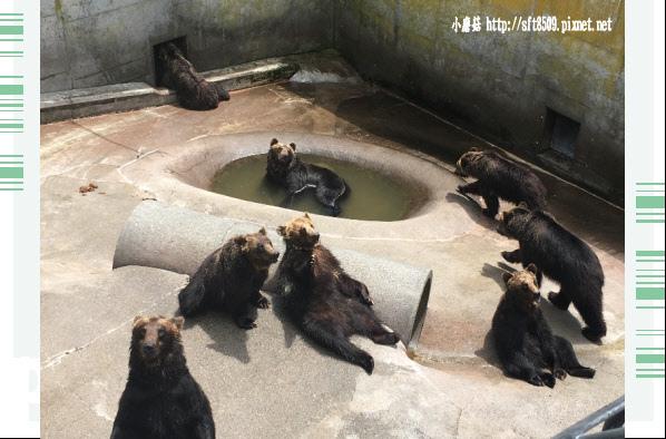 106.7.9.(39)昭和新山熊牧場.JPG