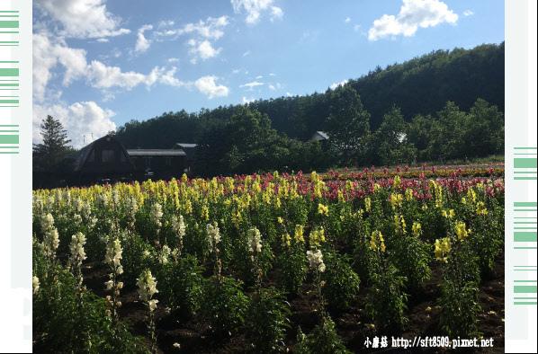 106.7.10.(99)富田農場.JPG
