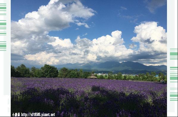 106.7.10.(135)富田農場.JPG