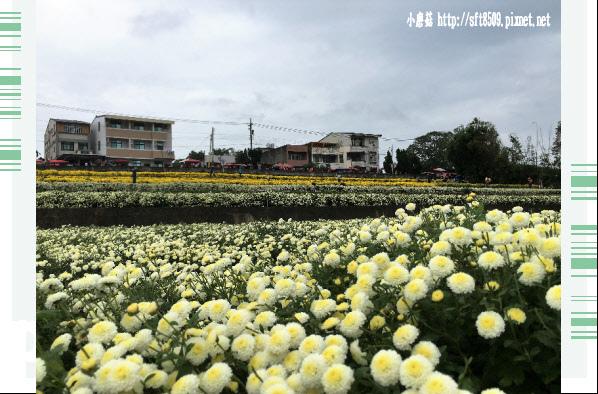 106.11.19.(78)苗栗銅鑼杭菊花海.JPG