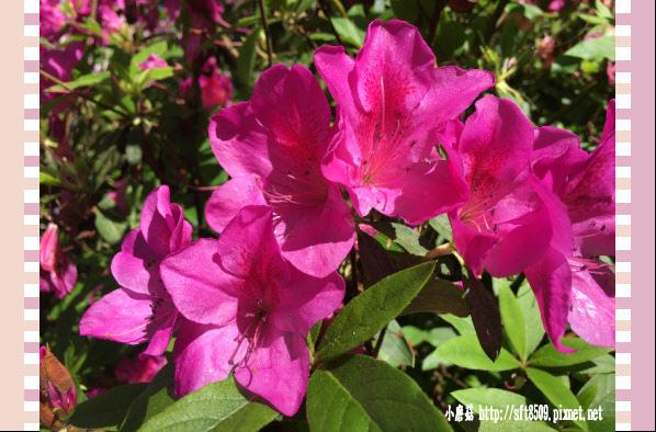 107.03.24.(87)新竹-六號花園.JPG