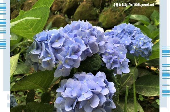 107.5.26.(10)沐心泉休閒農場.JPG