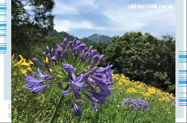107.5.26.(63)沐心泉休閒農場.JPG