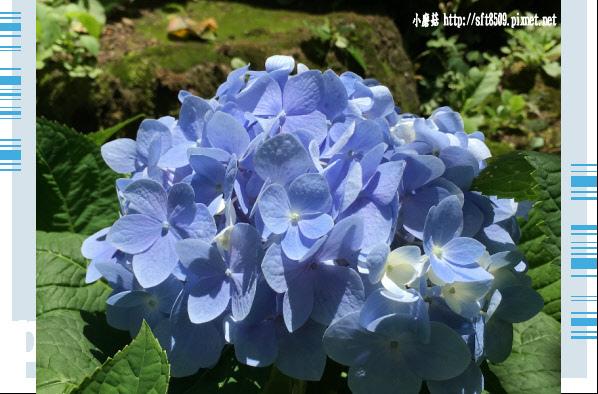 107.5.26.(155)沐心泉休閒農場.JPG