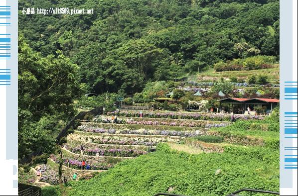 107.5.31.(1)竹子湖-大梯田生態農園.JPG