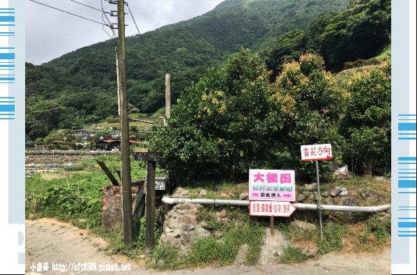 107.5.31.(2)竹子湖-大梯田生態農園.JPG