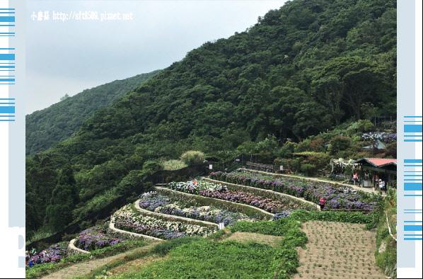 107.5.31.(6)竹子湖-大梯田生態農園.JPG