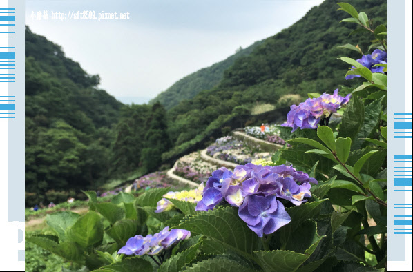 107.5.31.(9)竹子湖-大梯田生態農園.JPG
