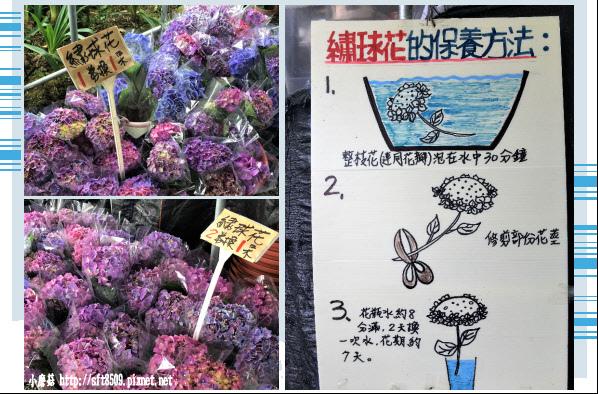 107.5.31.(12-1)竹子湖-大梯田生態農園.JPG