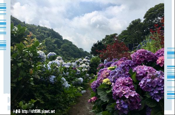 107.5.31.(19)竹子湖-大梯田生態農園.JPG