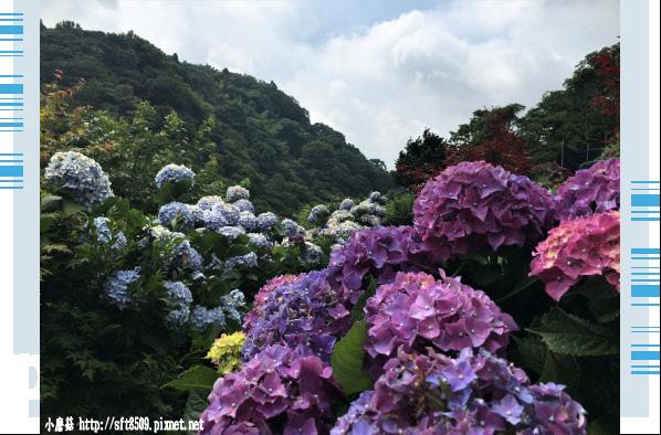 107.5.31.(21)竹子湖-大梯田生態農園.JPG