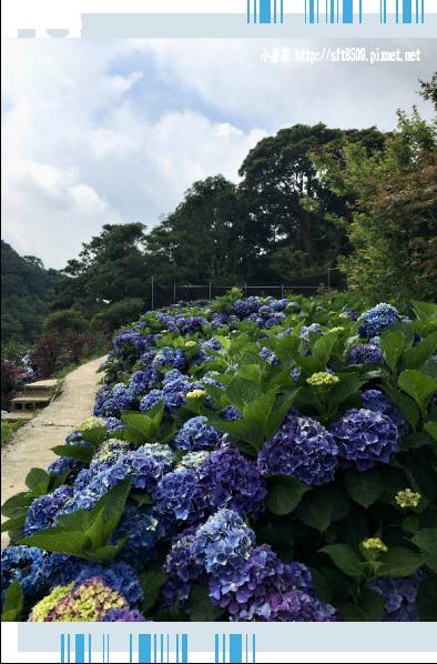 107.5.31.(34)竹子湖-大梯田生態農園.JPG