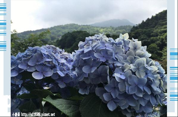 107.5.31.(65)竹子湖-大梯田生態農園.JPG