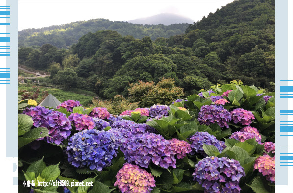 107.5.31.(68)竹子湖-大梯田生態農園.JPG