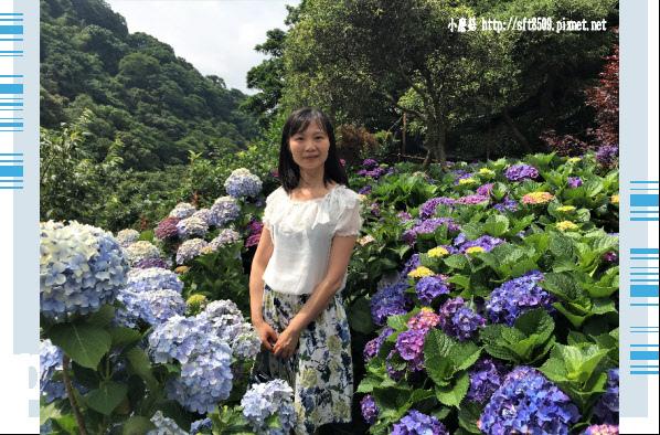 107.5.31.(72)竹子湖-大梯田生態農園.JPG