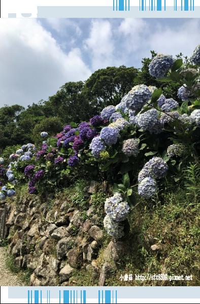 107.5.31.(78)竹子湖-大梯田生態農園.JPG