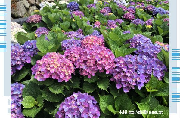 107.5.31.(87)竹子湖-大梯田生態農園.JPG