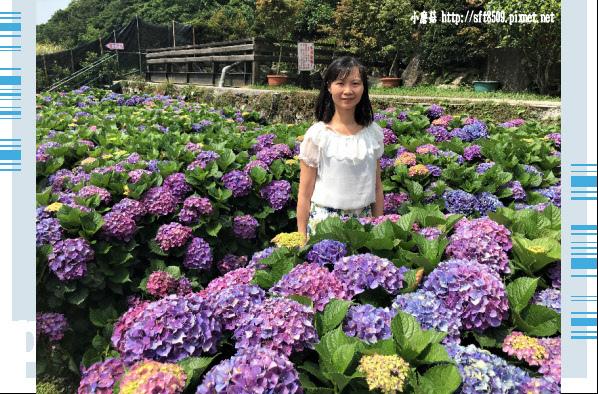 107.5.31.(94)竹子湖-大梯田生態農園.JPG