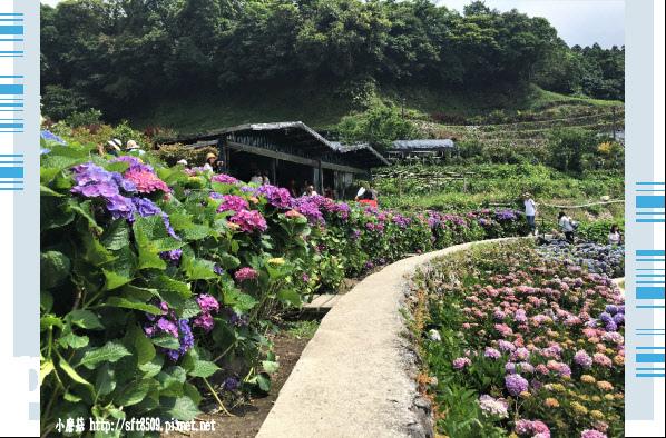 107.5.31.(102)竹子湖-大梯田生態農園.JPG