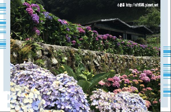 107.5.31.(112)竹子湖-大梯田生態農園.JPG