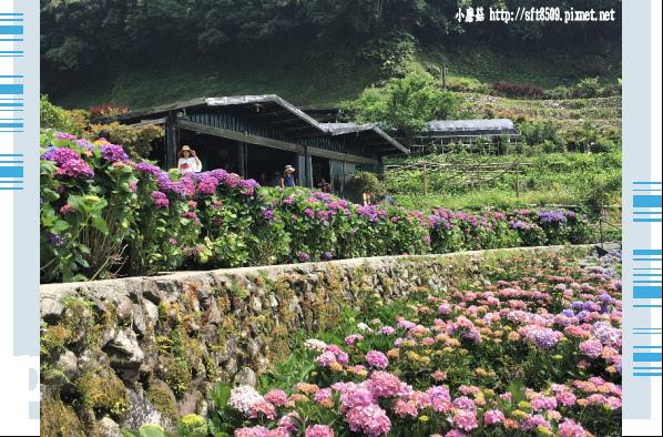 107.5.31.(113)竹子湖-大梯田生態農園.JPG