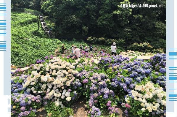 107.5.31.(114)竹子湖-大梯田生態農園.JPG