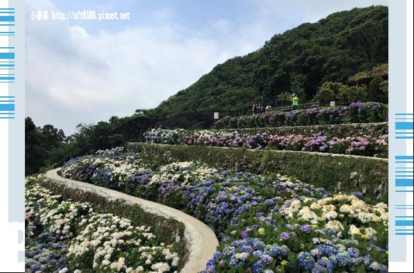 107.5.31.(117)竹子湖-大梯田生態農園.JPG