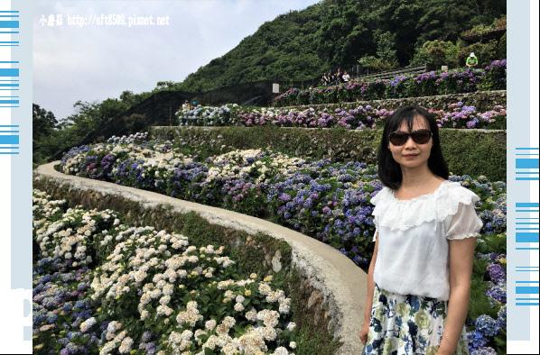 107.5.31.(119)竹子湖-大梯田生態農園.JPG