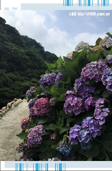 107.5.31.(122)竹子湖-大梯田生態農園.JPG