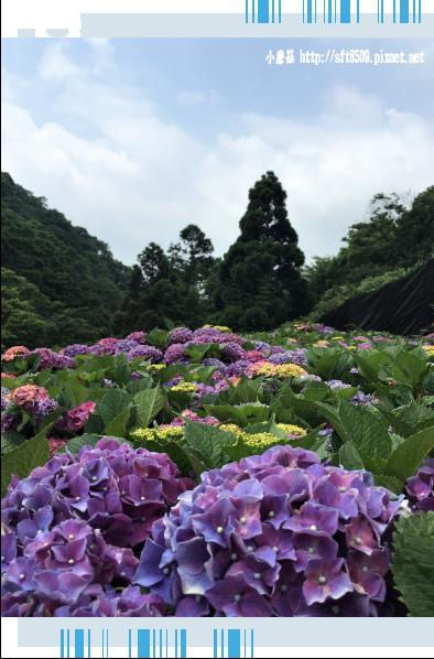 107.5.31.(123)竹子湖-大梯田生態農園.JPG