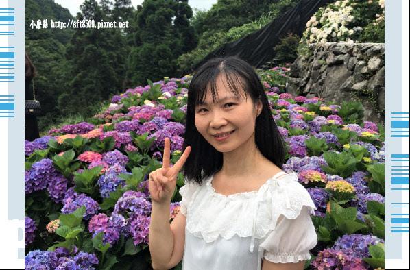 107.5.31.(131)竹子湖-大梯田生態農園.JPG