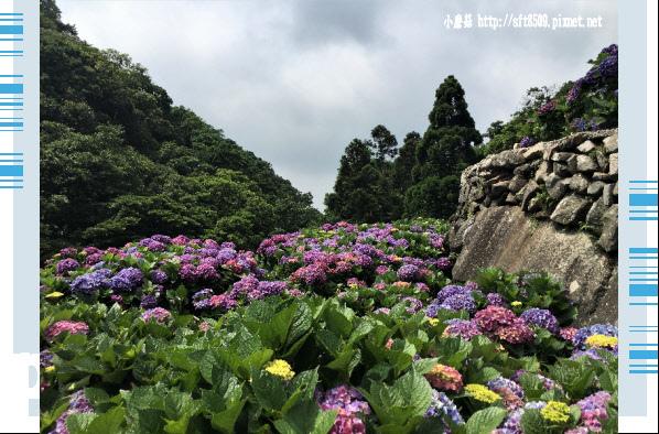 107.5.31.(132)竹子湖-大梯田生態農園.JPG
