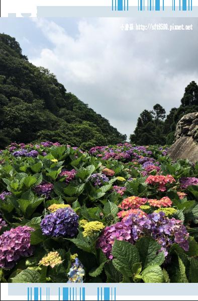 107.5.31.(136)竹子湖-大梯田生態農園.JPG
