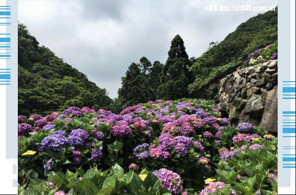 107.5.31.(137)竹子湖-大梯田生態農園.JPG