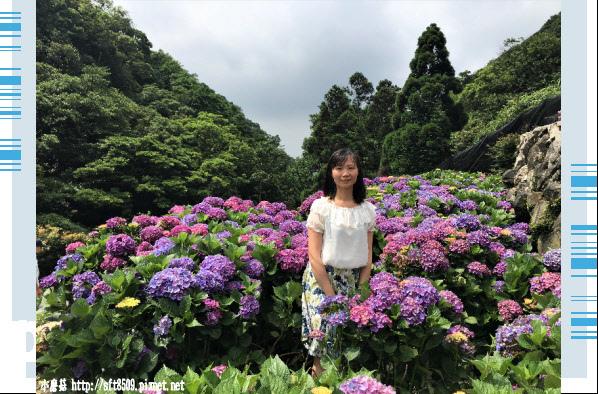 107.5.31.(139)竹子湖-大梯田生態農園.JPG
