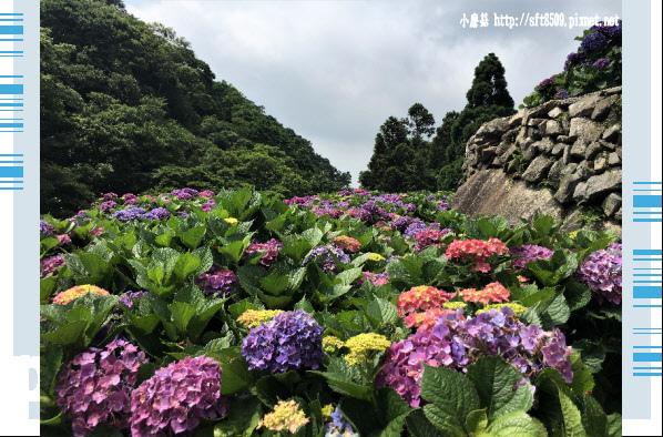 107.5.31.(143)竹子湖-大梯田生態農園.JPG