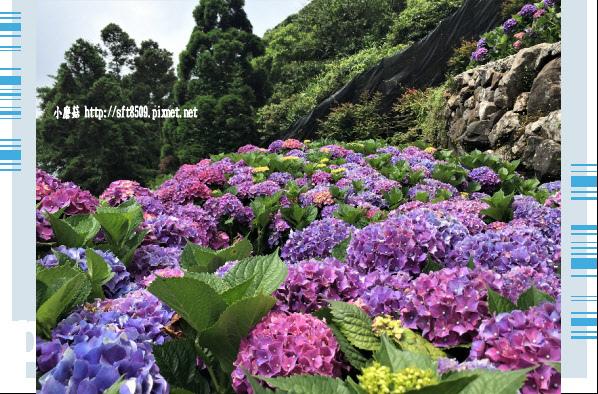 107.5.31.(144)竹子湖-大梯田生態農園.JPG