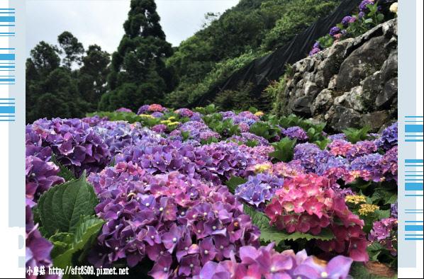 107.5.31.(145)竹子湖-大梯田生態農園.JPG