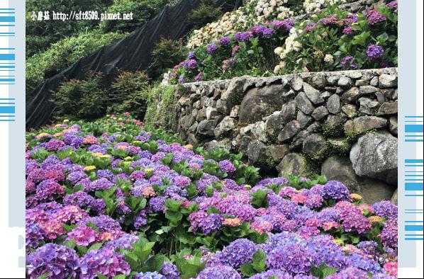 107.5.31.(148)竹子湖-大梯田生態農園.JPG