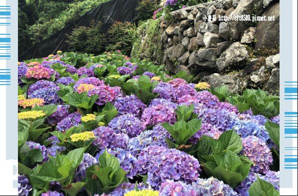 107.5.31.(149)竹子湖-大梯田生態農園.JPG
