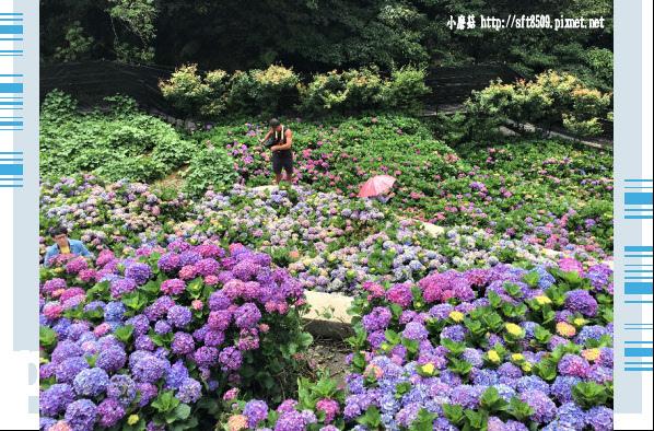 107.5.31.(156)竹子湖-大梯田生態農園.JPG