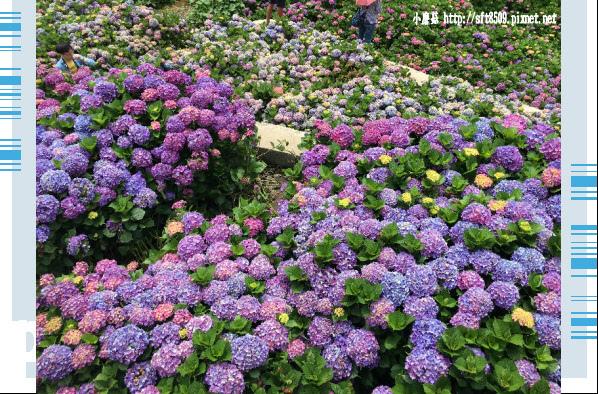 107.5.31.(158)竹子湖-大梯田生態農園.JPG