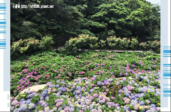 107.5.31.(159)竹子湖-大梯田生態農園.JPG