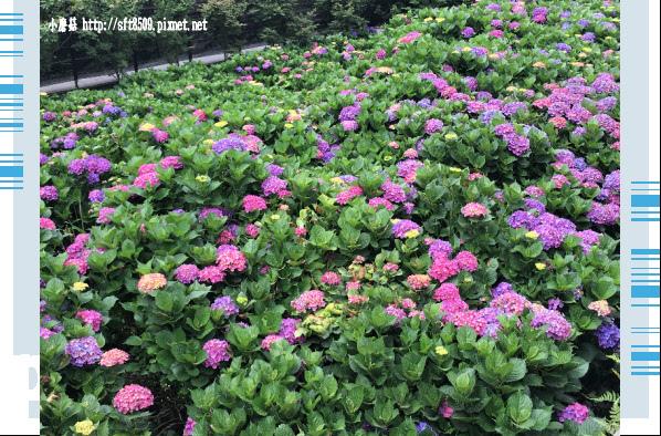 107.5.31.(161)竹子湖-大梯田生態農園.JPG