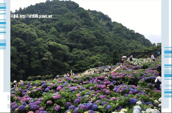 107.5.31.(164)竹子湖-大梯田生態農園.JPG