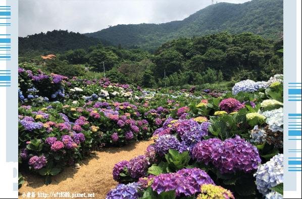 107.5.31.(37)陽明山竹子湖-高家繡球花田.JPG