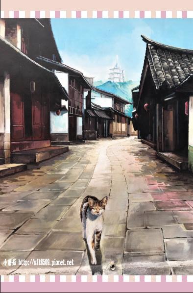 107.2.4.(48)嘉義-菁埔貓的世界.JPG
