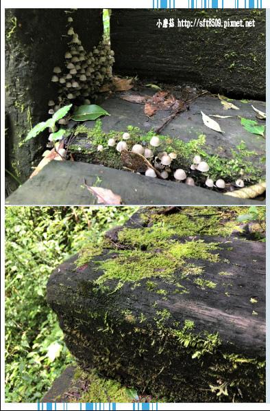 107.6.9.(76)杉林溪森林遊樂區.JPG